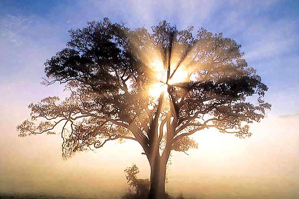 Árvore com efeito do sol (ilustração de uma árvore abençoada)